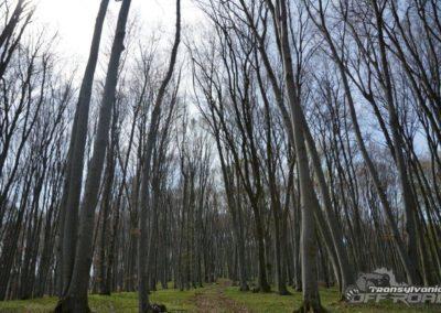 transylvania offroad tours