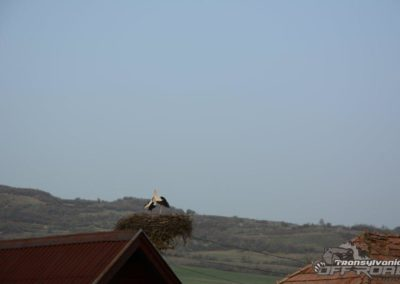 stork nest in Romania